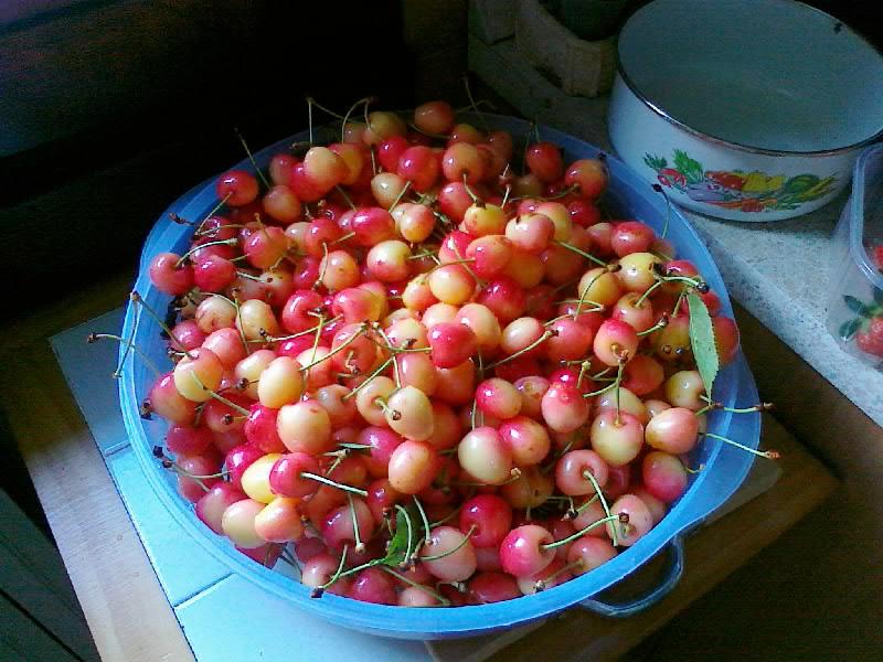 Meteopassione forum leggi argomento pianta di ciliegio for Pianta di ciliegio