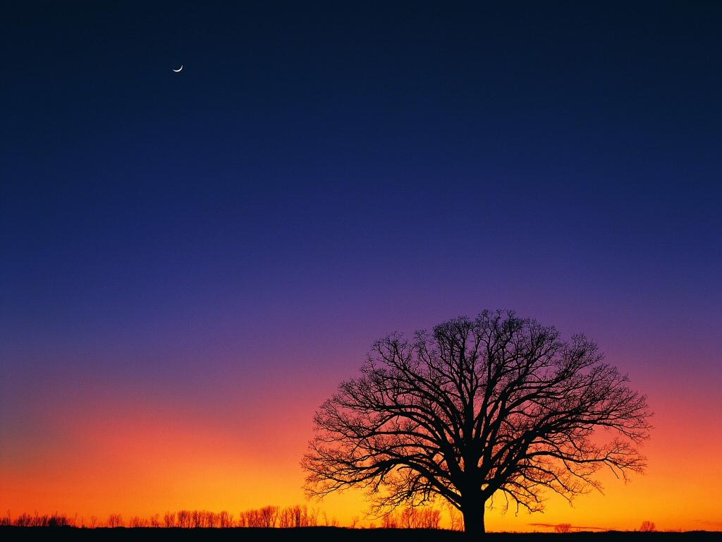 Oak Tree Drawing Meteopassione Forum Leggi Argomento Fotografie